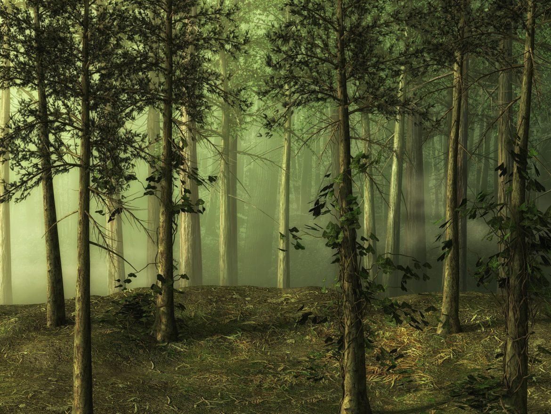 Déconfinement : Les balades dans les bois risques de pertuber les animaux
